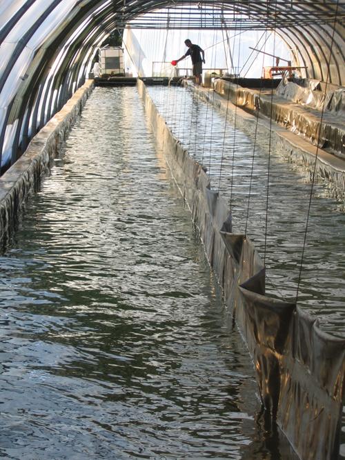 ferme du domaine algal spiruline française